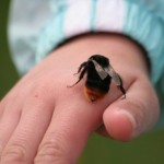 Quick treatment for bug bites