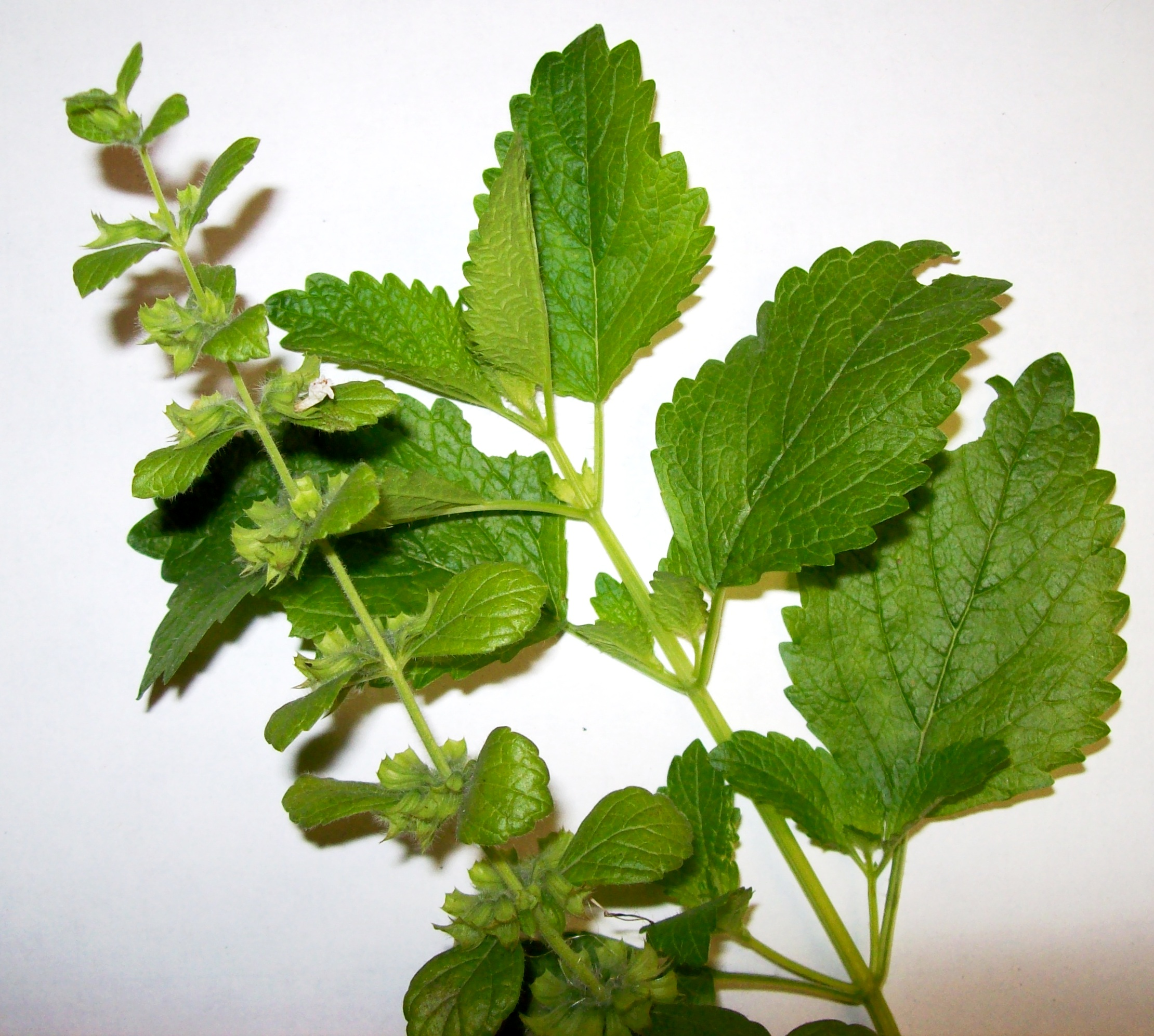 Natural Remedy To Treat Herpes